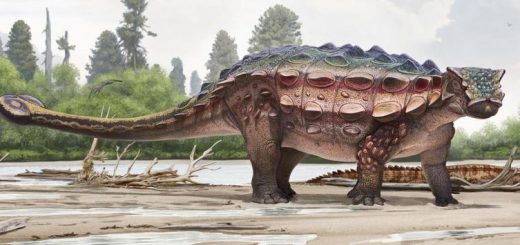 Une illustration d'artiste d'Akainacephalus johnsoni - Crédit : Andrey Atuchin and the Denver Museum of Nature & Science