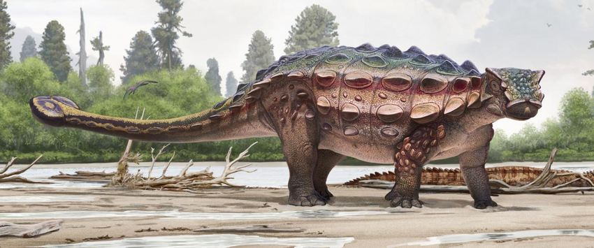 Une illustration d'artiste d'Akainacephalus johnsoni - Crédit : Andrey Atuchin and the Denver Museum of Nature & Science