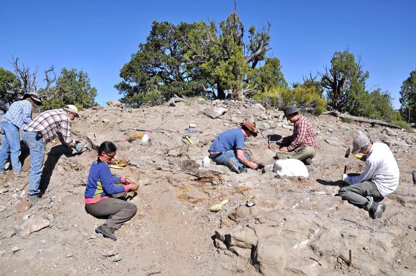 Excavation des os du squelette d'Akainacephalus johnsoni en 2009 - Crédit : Randall Irmis/Natural History Museum of Utah