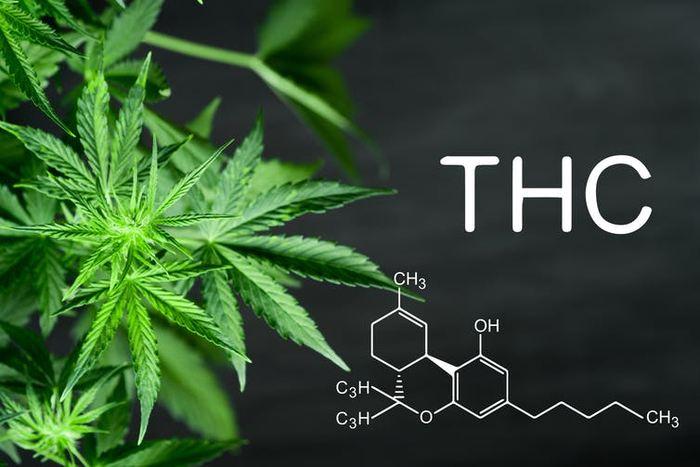 La structure moléculaire du THC, composant actif de la marijuana. De nombreux chimistes, produisant des cannabinoïdes synthétiques en laboratoire, utilisent les trois anneaux hexagonaux comme échafaudage pour générer de nouvelles molécules qui produisent un niveau similaire d'euphorie - Crédit : Lifestyle Discover/Shutterstock.com