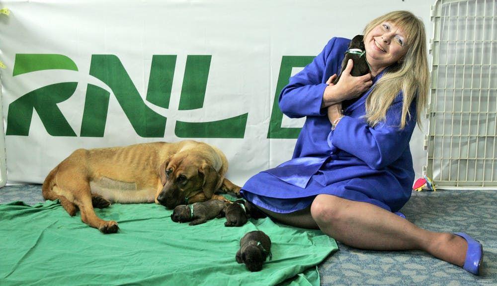 """Aux États-Unis, Bernann McKinney tient l'un des 5 chiots pit-bull clonés à côté d'une chienne lors de sa première rencontre avec l'Hôpital national pour animaux à Séoul, en Corée du Sud, le mardi 5 août 2008. McKinney a reçu 5 chiots, des copies de son bien aimé pit-bull """"Booger"""", provenant d'une société de biotechnologie sud-coréenne, dans le cadre de ce que cette société considère comme le premier service de clonage commercial canin au monde - Crédit : Ahn Young-joon/AP Photo"""