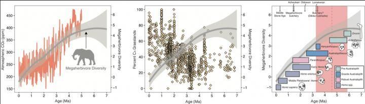 Le début du déclin des mégaherbivores il y a environ 4,6 millions d'années (ligne pointillée rouge et ombrage) se produit bien avant l'apparition d'espèces d'hominins porteurs d'outils capables de chasser de grandes proies - Crédit : John Rowan