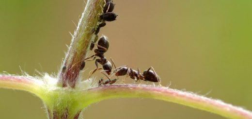 Une colonie de fourmis est comme un cerveau humain. Tout comme le neurone individuel n'a pas de mémoire, la fourmi individuel n'en a pas. Mais l'ensemble des neurones nous fournit la mémoire dont nous avons besoin et c'est la même chose pour une colonie de fourmis.