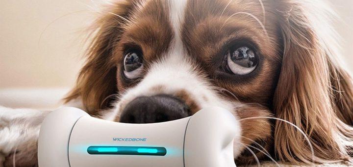 Décidément, on va loin dans la technologie. Wickedbone est un jouet connecté pour les chiens. Oui, c'est un jouet en forme d'os pour les chiens.