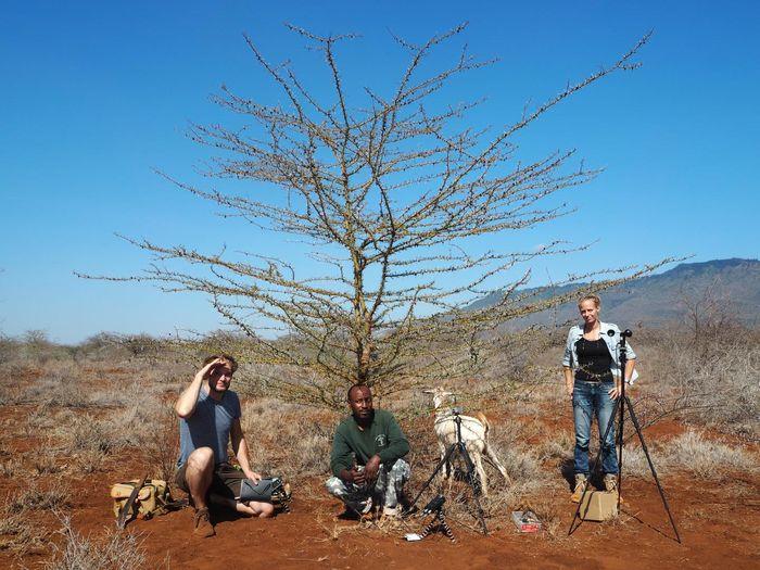 L'équipe de recherche dans la savane kényane: (de gauche à droite): Felix A. Hager, Peter Mwasi Lombo, la chèvre et Kathrin Krausa - Crédit : Felix A. Hager et Kathrin Krausa