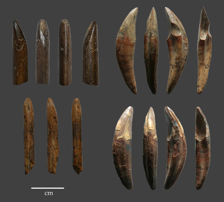 Un exemple d'outils fabriqués à partir d'os et de dents de singe récupérés dans les couches du Pléistocène supérieur de la grotte de Fa Hien, au Sri Lanka - Crédit : N. Amano