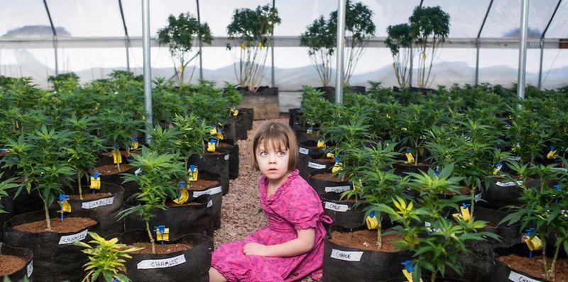 Charlotte Figi, l'enfant qui a utilisé de l'huile de CDB pour soigner son épilepsie