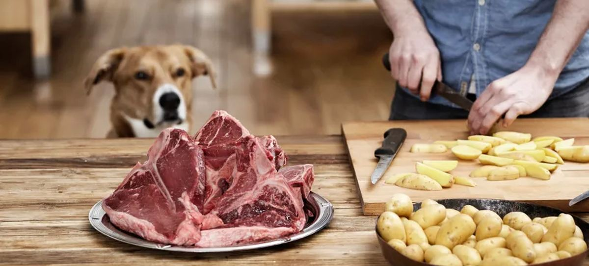 Selon une étude publiée dans Vet Record, de nombreux aliments crus pour chiens et chiens contiennent de fortes concentrations de bactéries pouvant poser un risque pour la santé des animaux et des humains.
