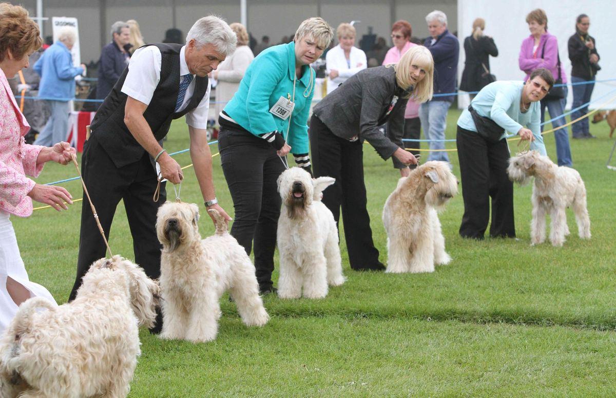 Races de chiens - Même si le chien est domestiqué depuis des milliers d'années. Le concept des races de chiens n'a que 150 ans, datant de l'époque victorienne.