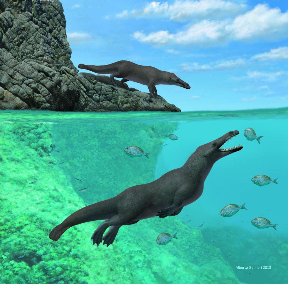 Les chercheurs rapportent la découverte d'une baleine à quatre pattes. Un ancêtre de nos baleines qui pouvait marcher sur la terre ferme.