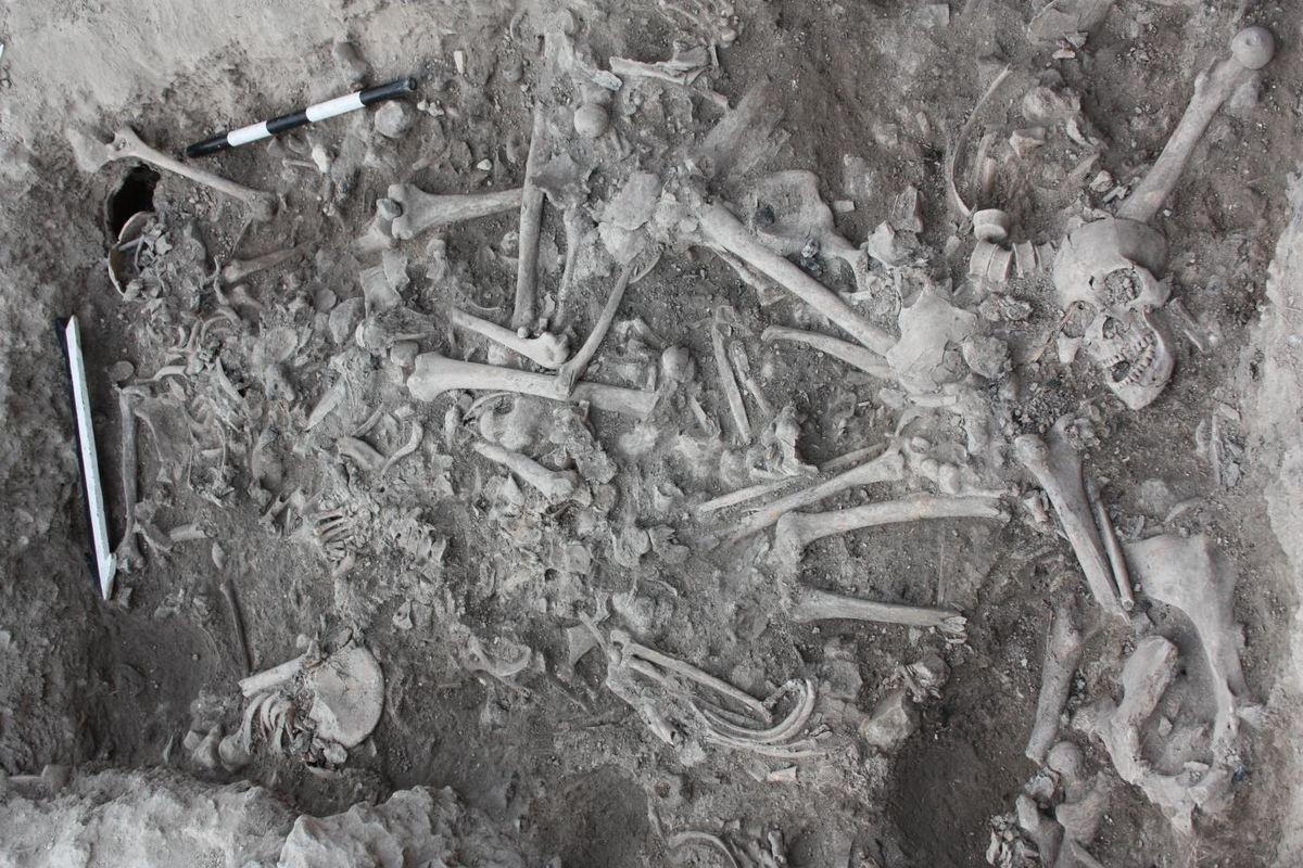 Croisades - Cette image montre les os des croisés trouvés dans un enterrement à Sidon, au Liban -  Crédit : Claude Doumet-Serhal