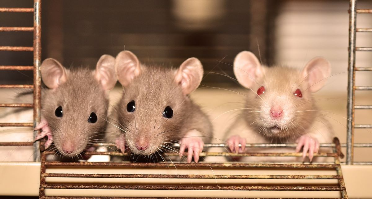 Depuis des décennies, on pensait que les animaux n'avaient aucune mémoire. Désormais, ce paradigme change et offre la perspective de mieux traiter l'Alzheimer dans le futur grâce à des modèles d'animaux plus précis.