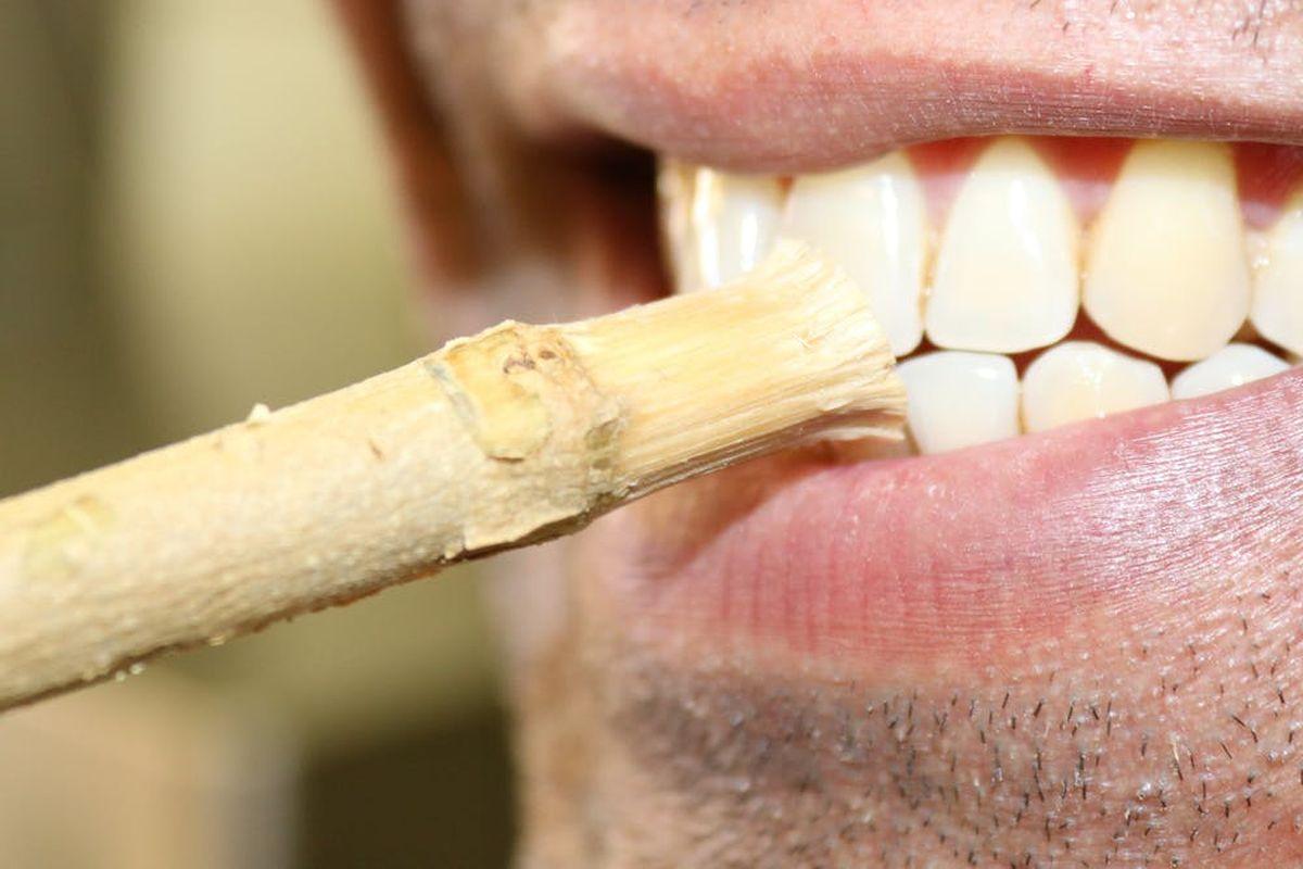 Un miswak combat les bactéries et nettoie physiquement les dents - Crédit : ustun ibisoglu / Shutterstock.com