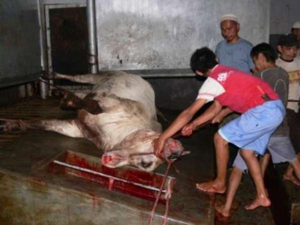 Des antibiotiques dans la viande à Antananarivo