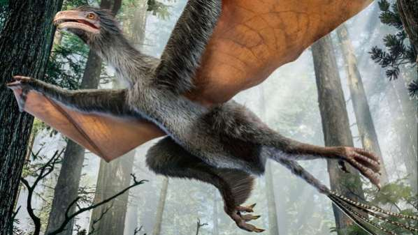 Le premier dinosaure qui volait comme une chauve-souris
