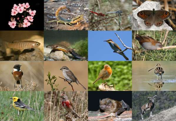 La biodiversité disparait rapidement en Europe