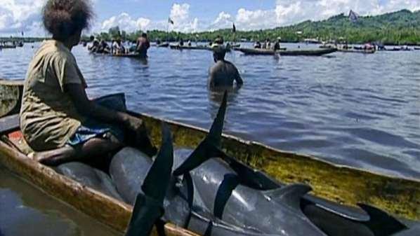 Des dauphins massacrés pour payer des jeunes mariées