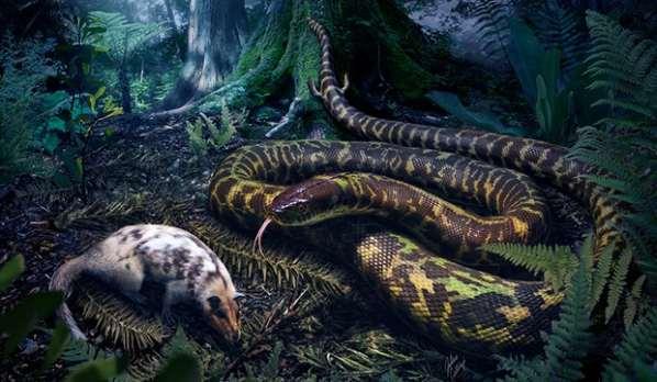 Des serpents avec des pieds auraient vécus sur Terre