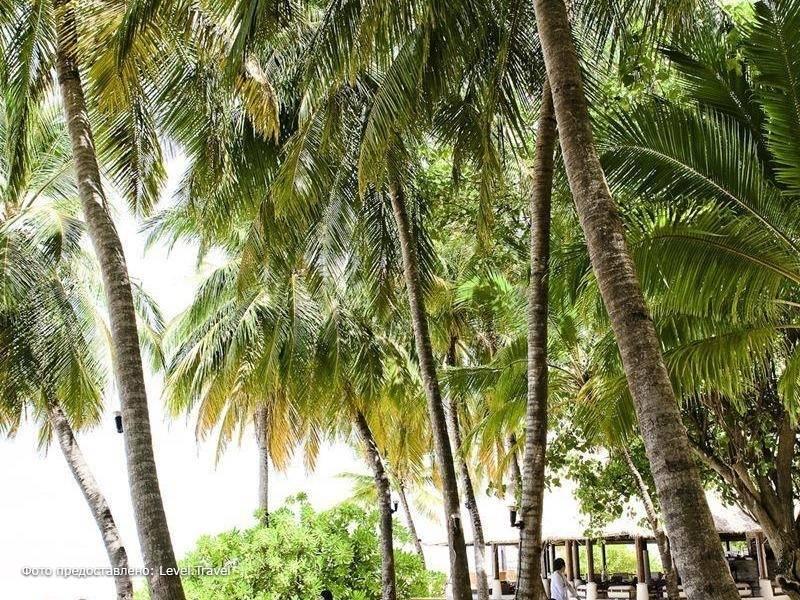 Фотография Banyan Tree Maldives Vabbinfaru