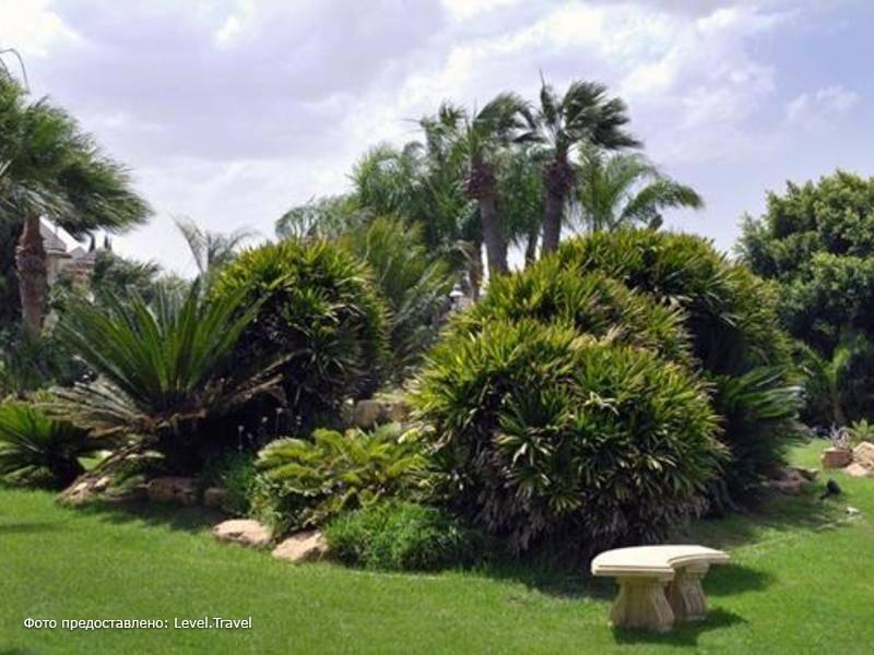 Фотография Palm Beach