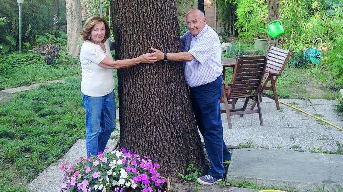 Tre alberi 'adottati' dal Comune