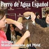 Seminario Perro de Agua - ZZCU30