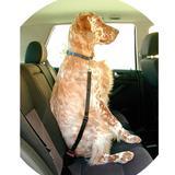 Sujetador de seguridad - Detalle interior coche - C50020