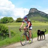 Ibáñez Dogcycle - SY0001