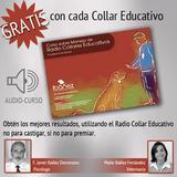 Curso sobre el manejo de collares educativos o adiestramiento