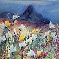 Cotton Grass Mountain