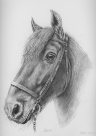 horse portrait in pencil