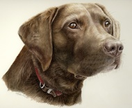 dog portrait in watercolour