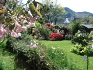spring in the back gardens