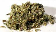 Mugwort cut .5oz (Artemisia Vulgaris)