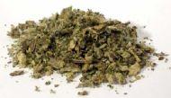 Mullein Leaf cut .5oz (Verbascum Thapsus)
