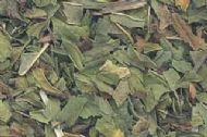 Peppermint Leaf cut .5oz (Mentha piperita)