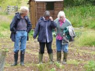 Allotment Open Day July