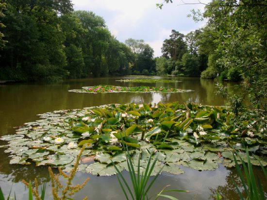 norfolk's unspoilt monet's garden from the picnic area end