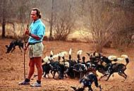 tony fitzjohn - mkomazi african wild dogs