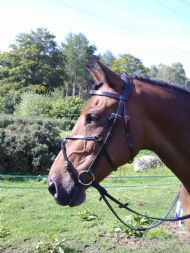 The Eventer Bridle