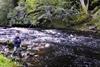 novar fishings, river alness, beat 3, boulder run thumbnail
