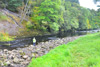 novar fishings, river alness, beat 3, folly pool thumbnail