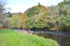 novar fishings, river alness, beat 3, stones pool thumbnail