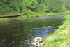 novar fishings, river alness, beat 4, holly thumbnail