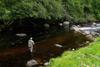 novar fishings, river alness, beat 5, ash thumbnail