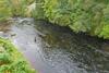 novar fishings, river alness, beat 5, dalneich bridgethumbnail