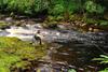 novar fishings, river alness, beat 6, pot pool thumbnail