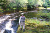 novar fishings, river alness, beat 6, pot pool thumbnail