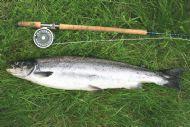 John Currie's Salmon
