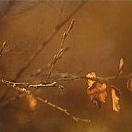 Earth Wondering: Autumn